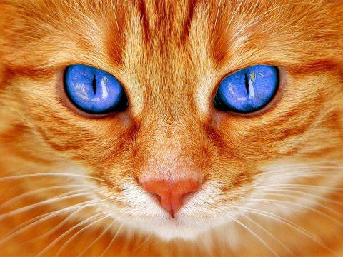 Persona kotem się toczy